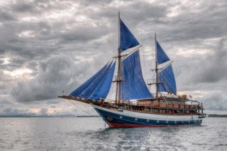 Sea Safari 8